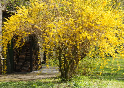 Mittwoch 18.09. Tugenden und Laster nach Hildegard von Bingen